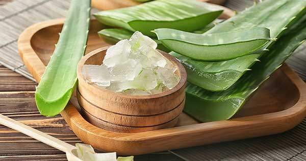 Beneficios del aloe vera en tu piel; ¡no puede faltar en tu rutina de belleza!